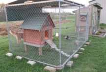 why are there so many chicken coops on pinterest?