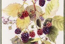 Berries -  jagody.