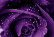 Purple Roses for My Mama / My mother's favorite color is purple and she loves roses.