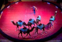 2015 Summer Season / 2015 summer season at Circus World in Baraboo / by Circus World