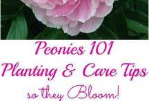 Flower gardens/plants