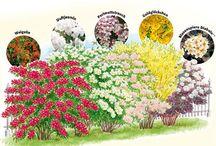 Garten l Pflanzen / für Bienen, Schmetterlinge und Hummeln