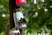 pozsgás függőkertek, Hanging Succulent Garden / pozsgás függőkertek, Hanging Succulent Garden