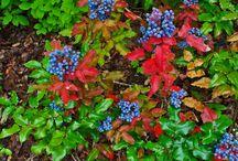Plants.Herbs.Medicine / by Alison