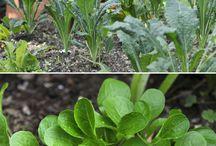 Joys of gardening / by International Compost Awareness Week (ICAW)