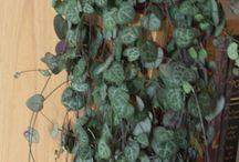 Indoor Gardening ~ All about Plants! / Indoor Plants