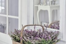 Syyskasveja - Fall plants / Vinkkejä syysasetelmien tekoon - Tips for fall plantings