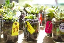 Succulents arrangements