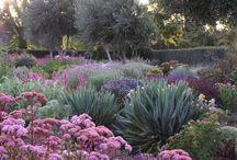 Colourful australian gardens