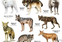 Animals - Info and miscellany