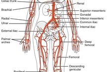 Science-human body / Science-human body