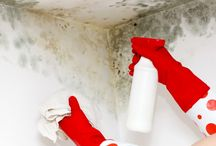 mould and mildew