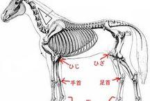骨格と筋肉:動物