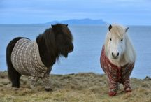 Animals in knitwear / by Rebecca Needes