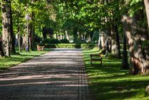 Natura / Pałac Ciekocinko harmonijnie wpisuje się w otaczający krajobraz.