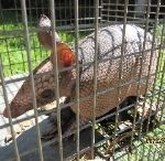 Armadillo Trapping Orlando / We can identify your Armadillo problem by looking at your garden and areas outside your home.