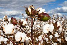 Organic Cotton Info