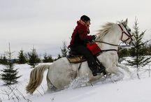 A cheval dans la neige au Canada / Voyager et faire une randonnée à cheval en plein hiver, les sabots dans neige, c'est possible ! Découvrez les paysages immaculés du Québec enneigé, les sensations grisantes des galops dans la poudreuse, des glissages en traineau à cheval, du craquement de la neige sous les raquettes…