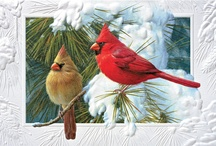 Cardinals - A Love Story / by Tina Ladner