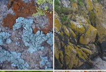 Lovely lichens mosses and the like