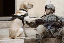 Thank you to our service men,women and dogs for all they do!! God bless you!! / God bless our four legged dogs that help out country along with the women and men that serve!!