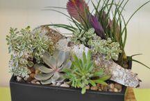 Succulents / Beretaniaflorist.com