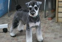 Asian Style Grooming / creative grooming dog, toy dogs, alternative grooming
