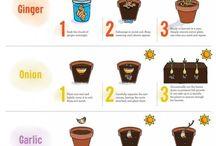 Gardening / Hydroponic