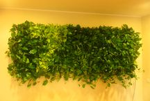 Green Walls @ 7 Film / Green Walls @ 7 Film