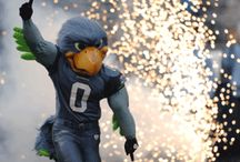 Seahawks / All Seahawks all the time! / by Ally White