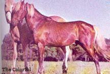 Historical Chincoteague Ponies
