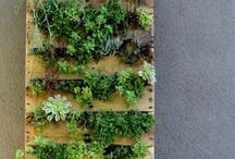 jardin balcon