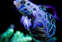 Halak, polipok, vízi élőlények, víz alatti élet