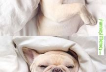doggies ❤
