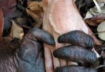 Podanie ruky