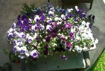 Flores y plantas!!!