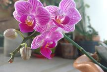 Flores de Casa