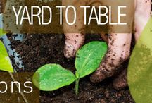 Yard to Table / Highlight easy steps for Health and Wellness  right from your own yard.