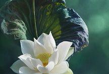 АРТ - цветы