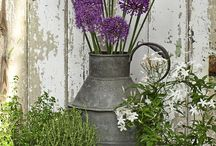 Container garden / by Cheryl Winters