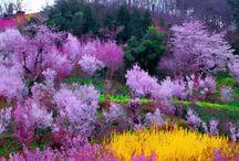 Фиолетовый оттенок восхитителен!