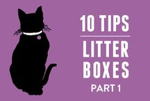 Litter Box Tips / Want a cleaner litter box? Use World's Best Cat Litter and follow these tips!