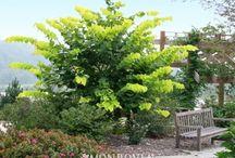 Popular Michigan Trees / Popular Michigan Landscape Quality Trees