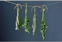Herbs and regrow vegetables