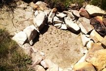 Watershed Restoration