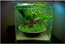 Aquaristik und Pflanzenbecken