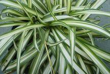 piante d appartamento