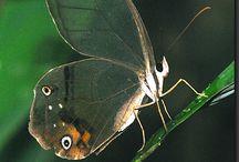 ○ Butterflies ○