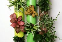 plante en tube