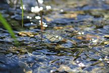 Reference - Water / by Jill Turpin